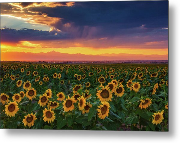 Summer Radiance Metal Print