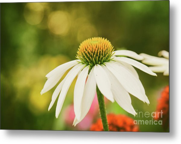 Summer Sunshine Metal Print