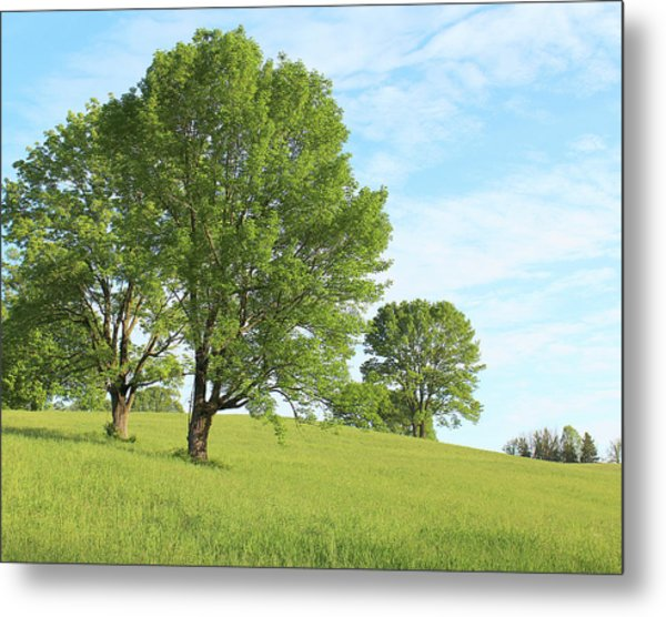 Summer Trees Metal Print