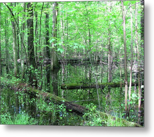 Summer Woods Metal Print by Trisha Dahm