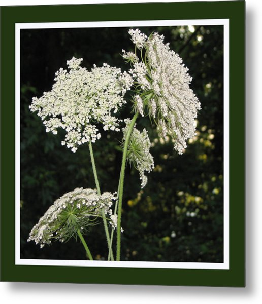 Summer's Delight Metal Print by Ginger Howland