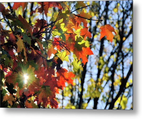 Summer's Gone Metal Print by JAMART Photography