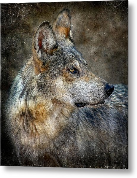 Summertime Coated Wolf Metal Print