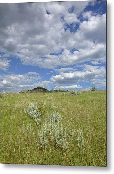 Summertime On The Prairie Metal Print
