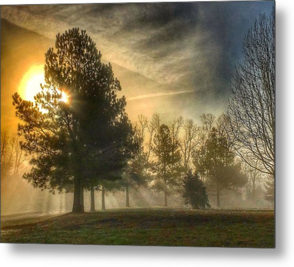 Sun And Trees Metal Print
