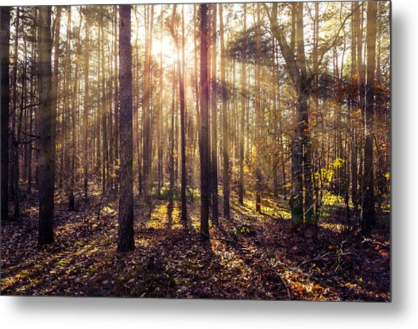 Sun Beams In The Autumn Forest Metal Print