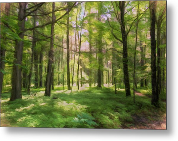 Metal Print featuring the photograph Sun Dappled Forest by John M Bailey