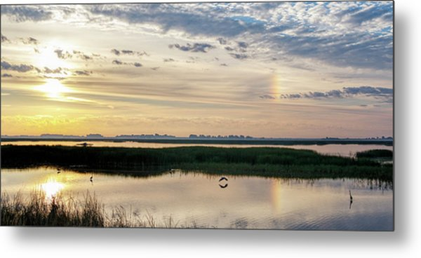 Metal Print featuring the photograph Sun Dog And Herons by Rob Graham