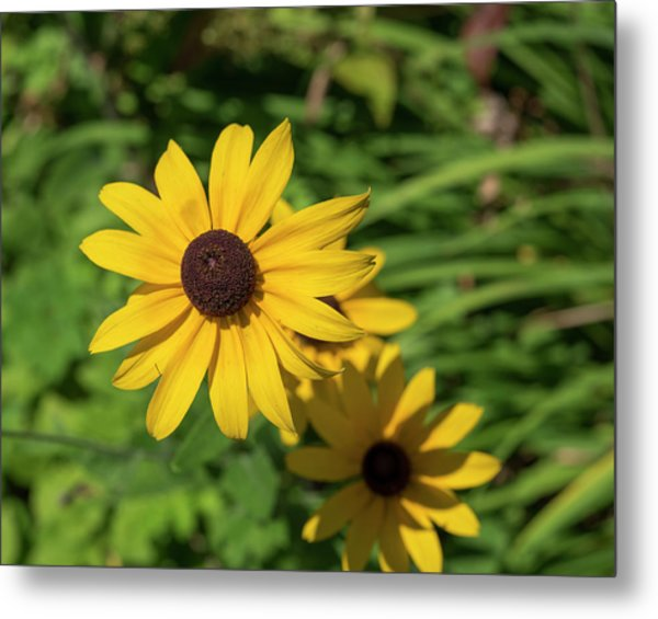 Sun Drenched Daisy Metal Print
