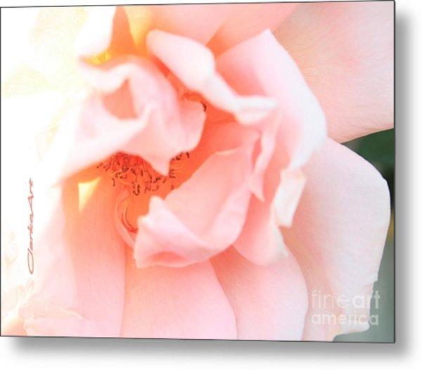 Sun-drenched Rose Metal Print