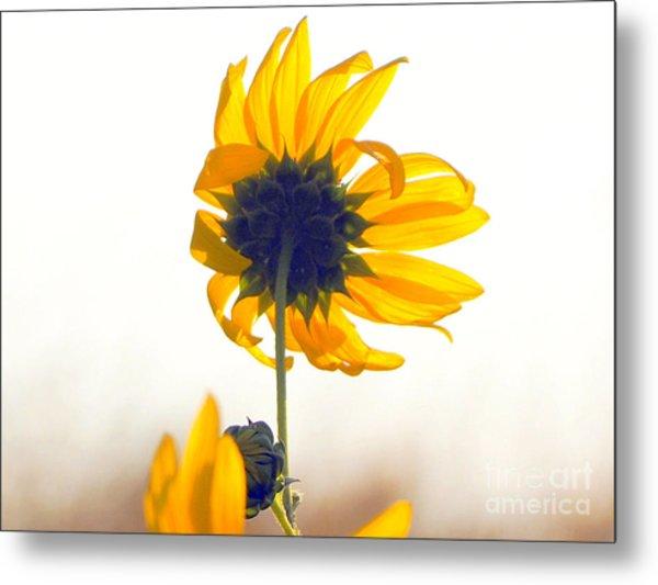 Sun Flower 101 Metal Print