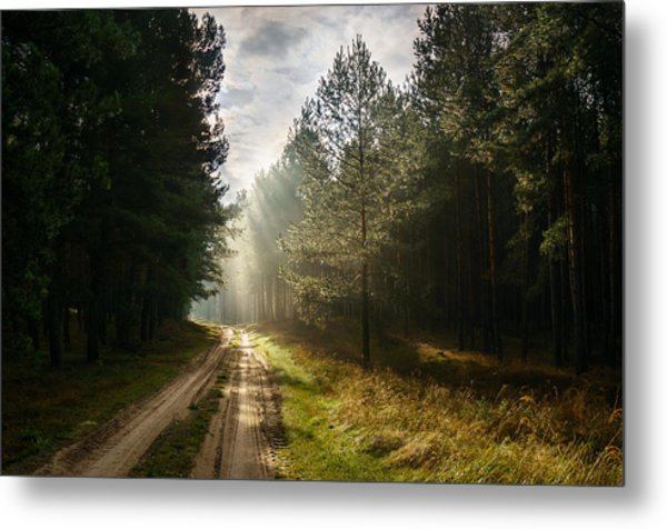 Sun Light At Pine Forest Metal Print
