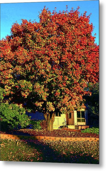 Sun-shining Autumn Metal Print