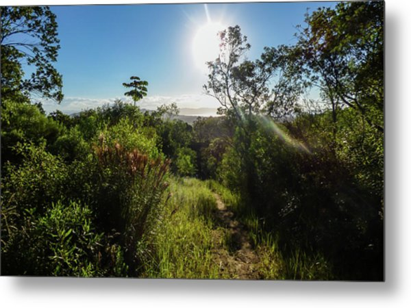Sun Shining Over The Atlantic Forest Metal Print