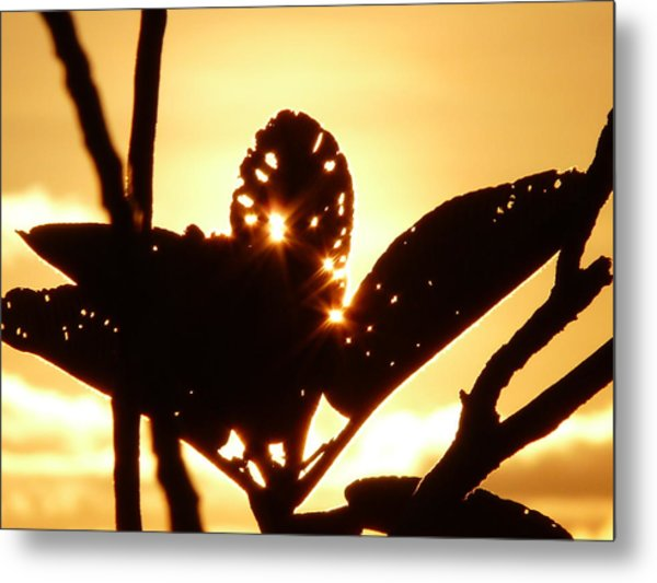 Sun Shining Through A Leaf Metal Print
