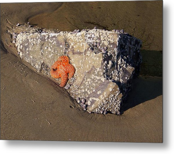 Sunbathing Metal Print by Angi Parks