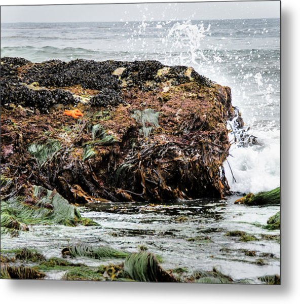 Metal Print featuring the photograph Sunbathing Starfish by Penny Lisowski