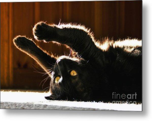 Sunbeam Kitty Metal Print