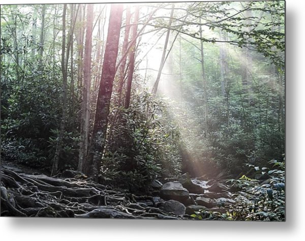Sunbeam Streaming Into The Forest Metal Print