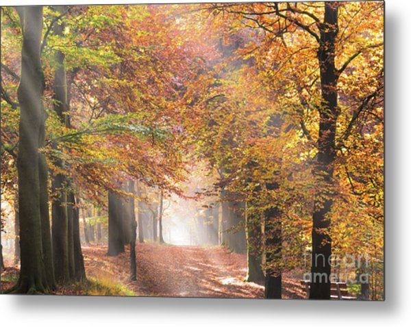 Sunbeams In A Forest In Autumn Metal Print