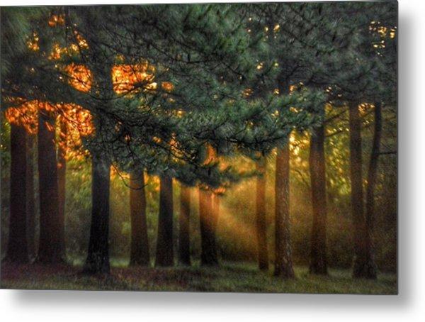 Sunbeams Through The Trees Metal Print