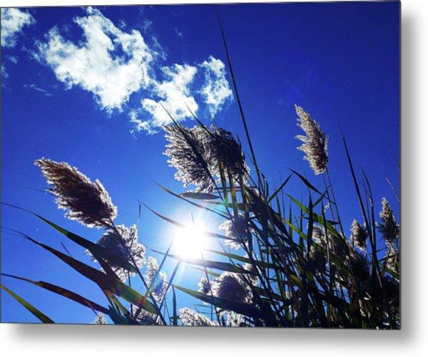 Sunburst Reeds Metal Print