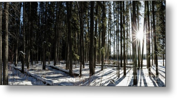 Sundial Forest Metal Print