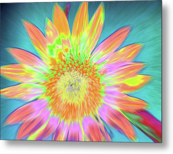 Sunfeathered Metal Print