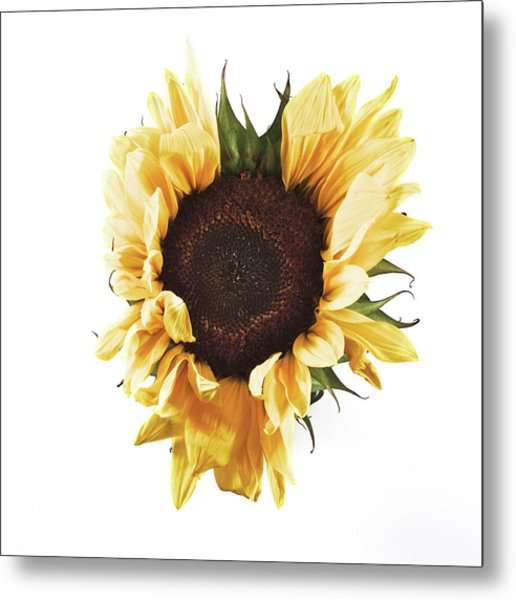 Sunflower #1 Metal Print