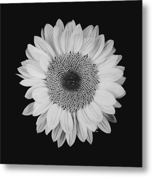 Sunflower #10 Metal Print