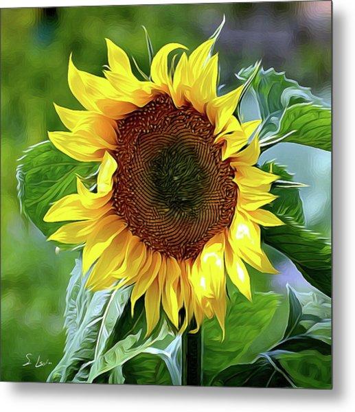 Sunflower 10...10.28 Yellow Symbolised Happiness Metal Print