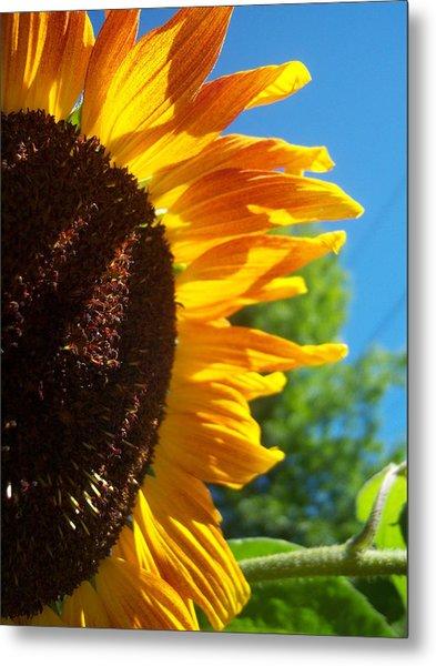 Sunflower 139 Metal Print by Ken Day