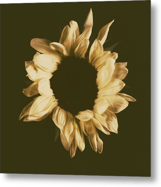 Sunflower #3 Metal Print