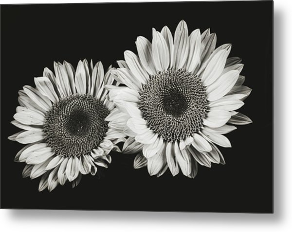 Sunflower #5 Metal Print