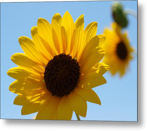Sunflower 4 Metal Print by James Granberry