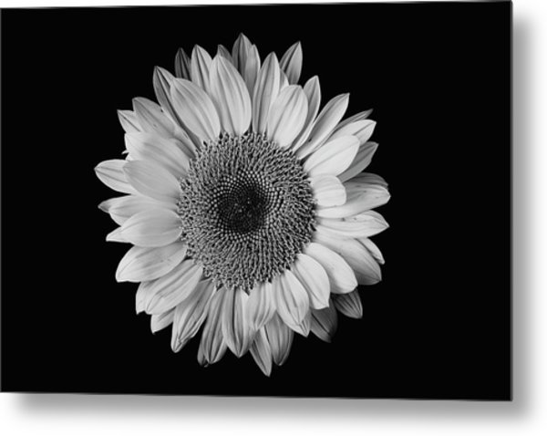 Sunflower #7 Metal Print