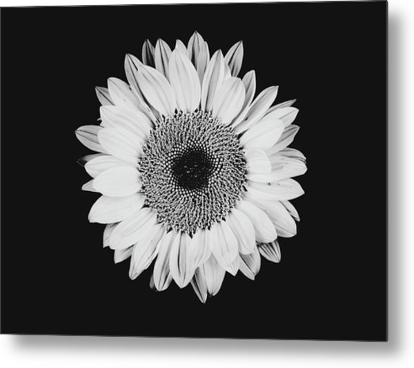 Sunflower #8 Metal Print