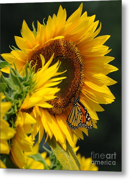 Sunflower And Monarch 3 Metal Print