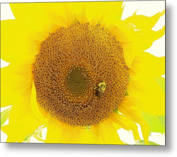 Sunflower And The Happy Bee Metal Print