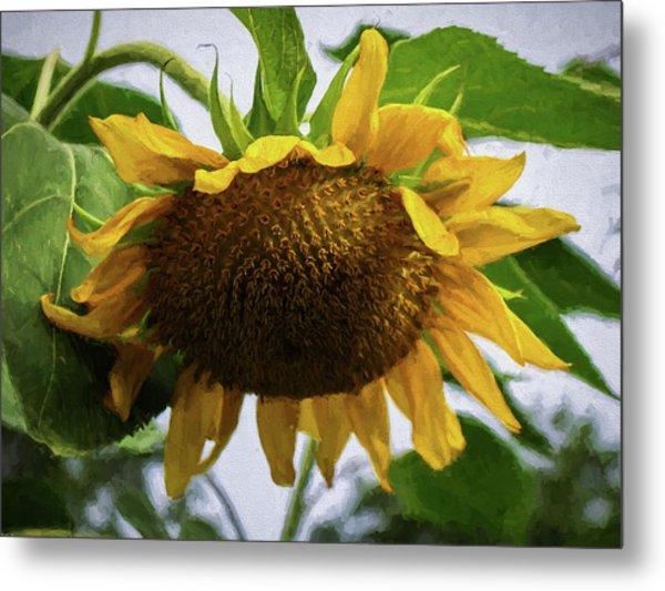 Sunflower Art II Metal Print