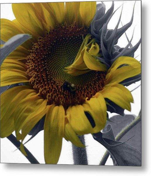 Sunflower Bee Metal Print