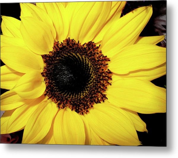 Sunflower Big And Beautiful Metal Print by Julie Palencia