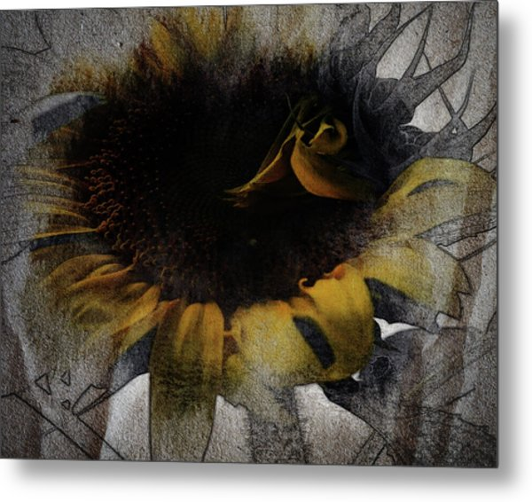 Sunflower Canvas Metal Print