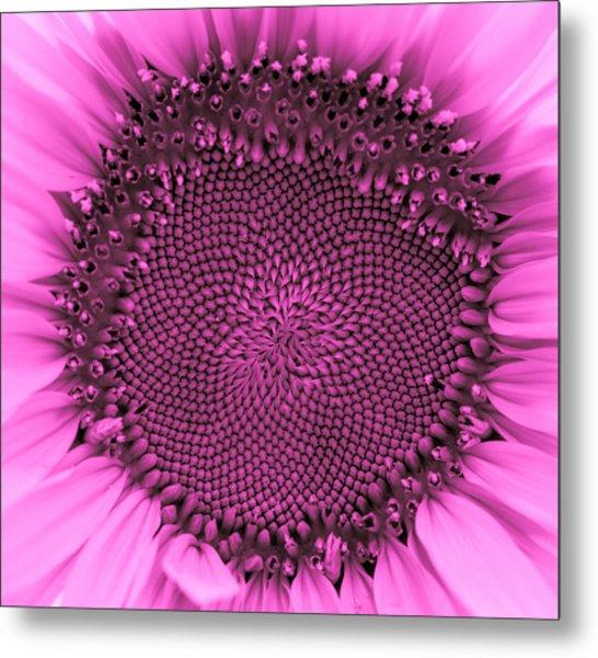 Sunflower Centered Pink Metal Print