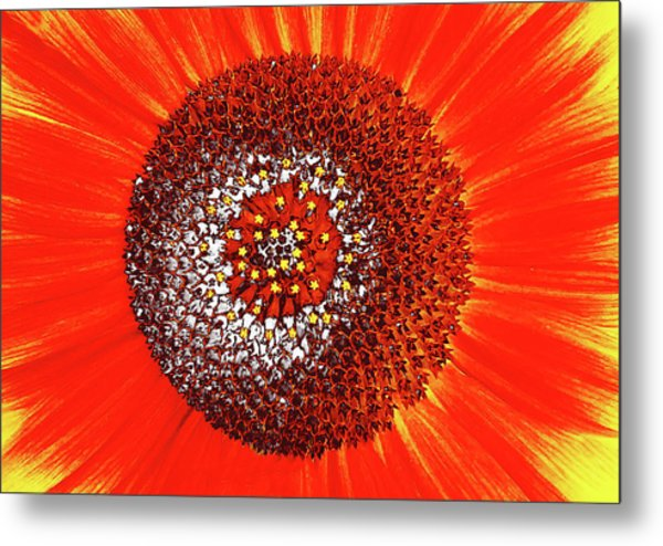 Sunflower Close Metal Print