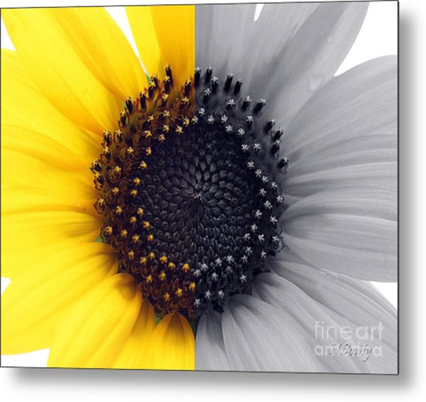 Sunflower Equinox Metal Print