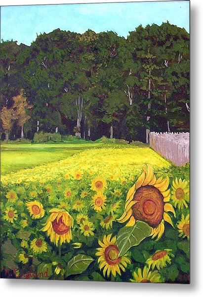 Sunflower Field Metal Print by Hilary England