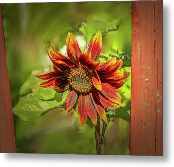 Sunflower #g5 Metal Print