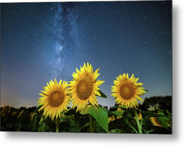 Sunflower Galaxy II Metal Print
