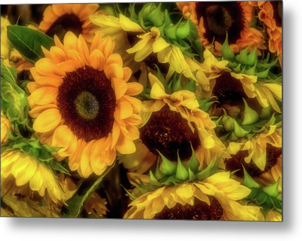 Sunflower Garden Metal Print